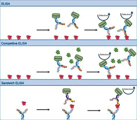 Enzyme assay protocol